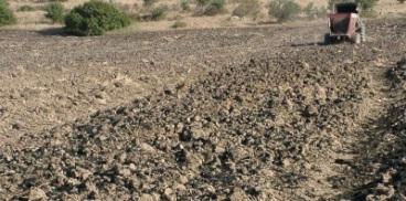 Fanghi di depurazione in agricoltura