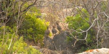 Calendario Venatorio Sardegna.Sardegnaambiente Argomenti Natura E Biodiversita