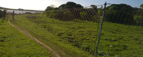 Sardegna foreste attivit gestione fauna for Cattura per capre