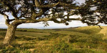 Sardegna foreste flora e fauna flora alberi - Sughero pianta da giardino ...