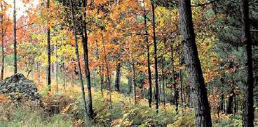 I colori della foresta